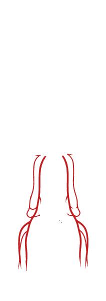 Leg arteries
